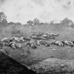 Rows of Confederate dead have been positioned at the edge of the Rose woods (July 5, 1863, Timothy H. O'Sullivan, photographer; Library of Congress)