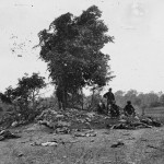 Confederate dead litter the ground around a small wooded mound (September 19, 1862, Alexander Gardner, photographer; Library of Congress)