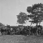 Blacksmiths, including African Americans, shoeing horses at headquarters, Army of the Potomac (Alexander Gardner, photographer, September 1862; Library of Congress)