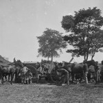 African Americans blacksmiths are pictured shoeing horses at the headquarters of the Army of the Potomac after the Battle of Antietam (Alexander Gardner, photographer, September 1862; Library of Congress)