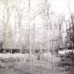 Baggage wagons for the 13th Massachusetts in the regiment's Williamsport camp (U.S. Army Military History Institute)