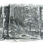 Slain soldiers remain unburied in a wooded section of the battlefield's right side (Harper's Weekly, August 22, 1863; NPS History Collection)