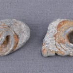 Two flattened minie balls saved by 1st Lieutenant George Davis of the 10th Vermont from the Battle of Monocacy. One of the balls supposedly wounded one of Daviss friends Davis received the Medal of Honor for his bravery during the battle. (Monocacy National Battlefield)